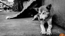dog in tacloban